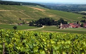 Vignoble chablisien, Milly