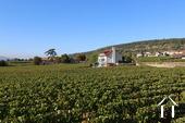 House in vineyards